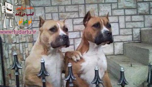 عکسهای سگهای زیبا