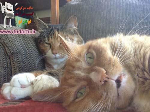 عکسهای باحال گربه ها