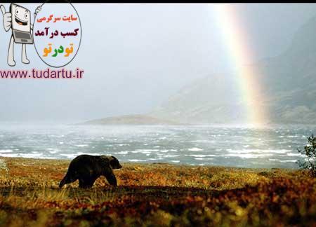 عکس خرس و حیوانات