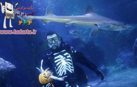 عکسهای حیوانات دریایی