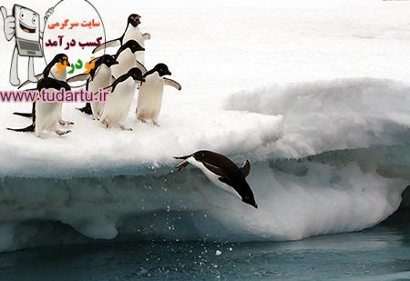 عکس پرندگان قطب