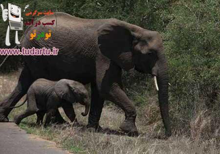 عکس حیوانات جنگل