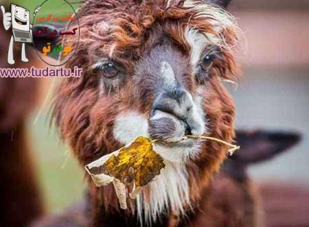 عکسهای جالب حیوانات