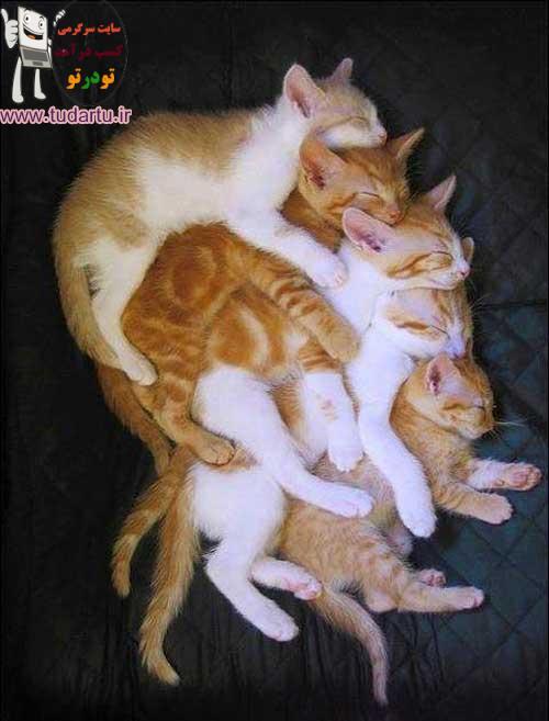 گربه های شیطون