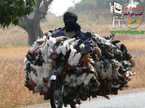 عکس جالب از مرغ فروشی در هندوستان