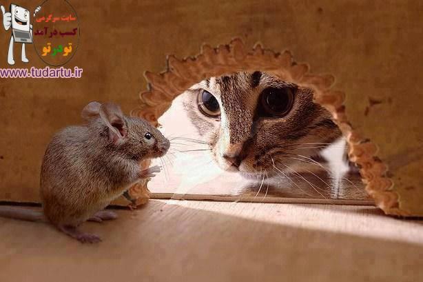 عکس تام و جری در دنیای واقعی
