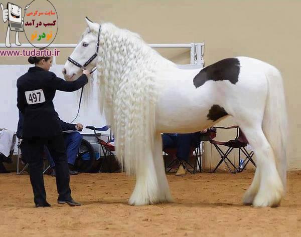 عکس یکی از زیباترین اسب های جهان